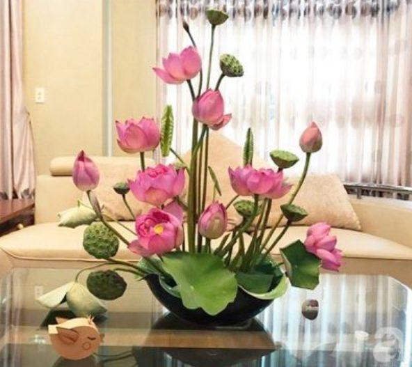 hoa sen ngày Tết